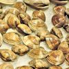 fresh-atlantic-clams-898337_640
