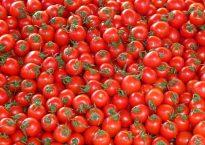 tomatoes-73913_640