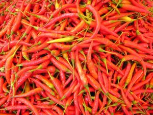 chilli-pepper-449_640